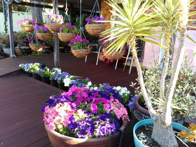Decking surrounded by beautiful flowers in pots and hanging baskets