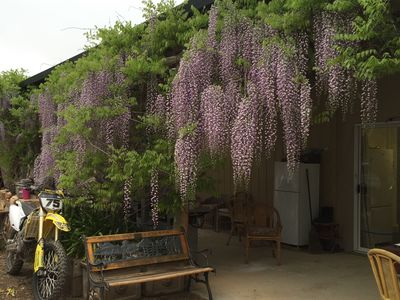 the shady verandah and entrance to Wisteria Farmstay