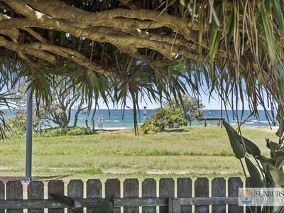 Pandanus on Emerald Beach House