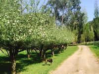 Our pretty little apple orchard