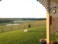 Fully enclosed half acre yard - for the dog or the kids