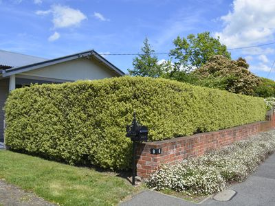 Privacy behind box hedges