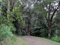 The walking track to Ferny Gully on the property