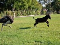 Everyone likes a game of chase