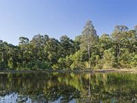 Lovedale large dam