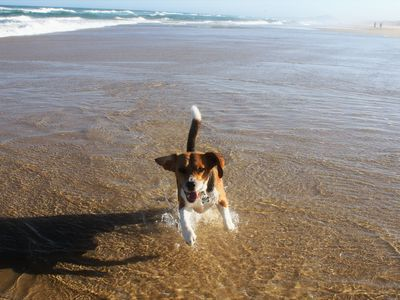 Dog friendly Castaway's Beach is only 3 min walk from the door step