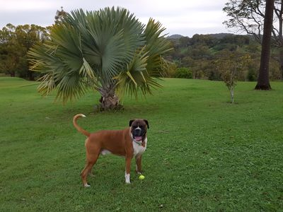 Pets enjoy the great open spaces