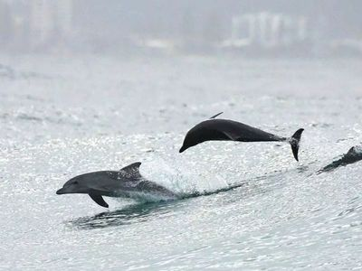 Dance with the dolphins at the BLISS bungalow Byron Bay